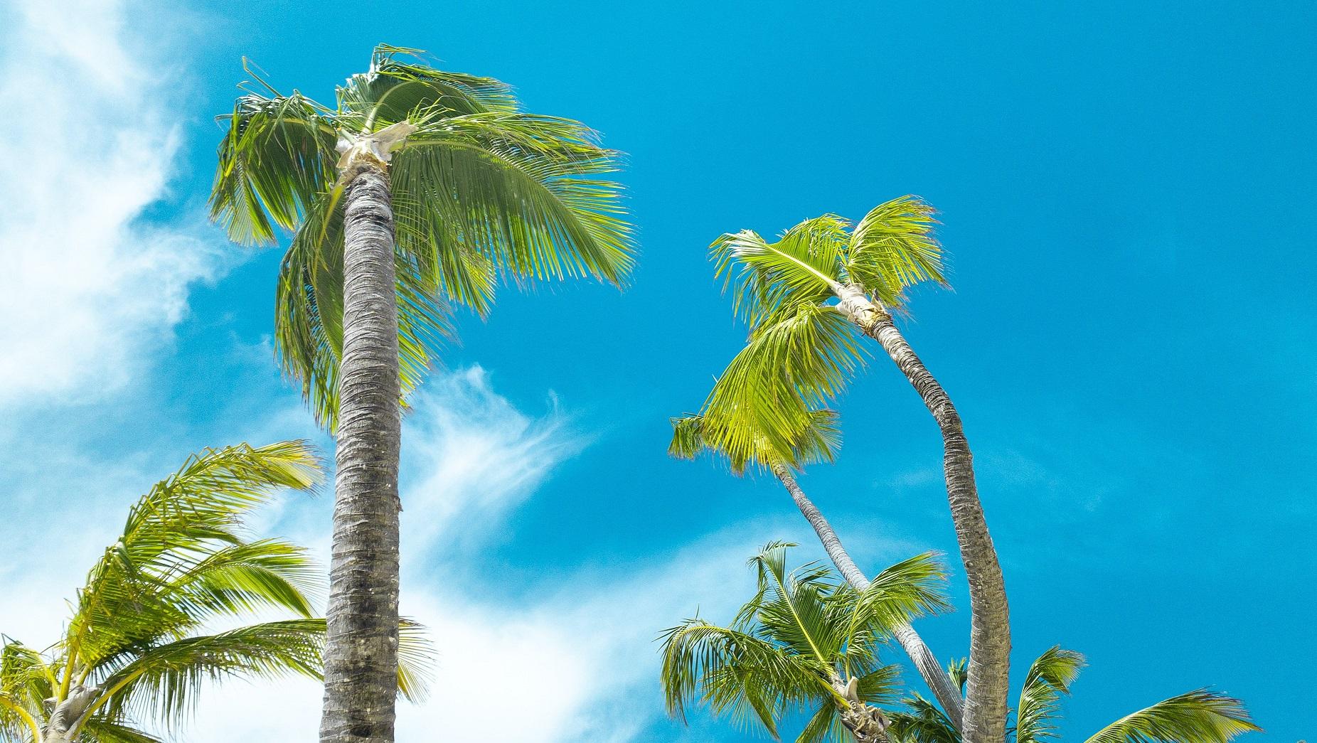 ハワイアンジュエリー モチーフ ヤシの木