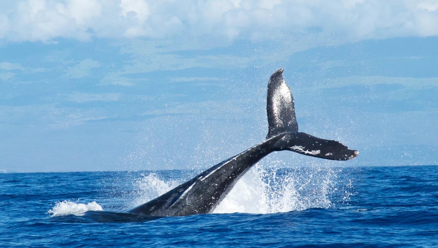 ハワイアンジュエリー モチーフ クジラの尾