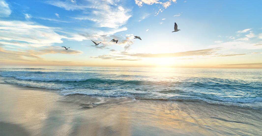 ハワイのビーチの夕暮れの写真 空には鳥が数羽飛んでいる